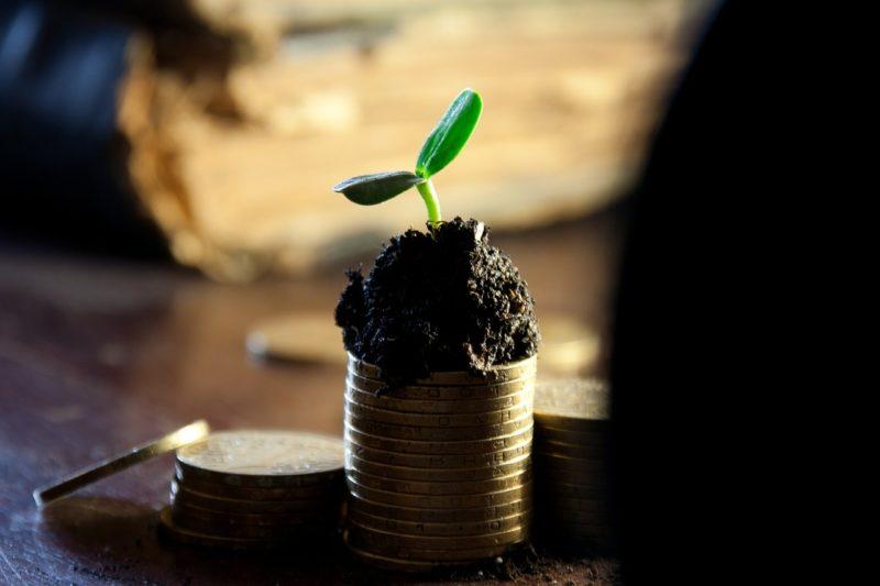 dividends vs salary profits